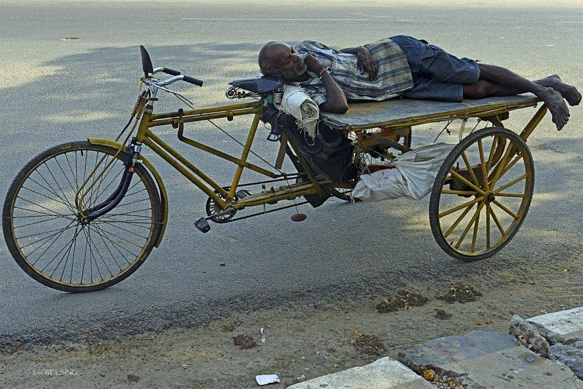 Sieste à l'ombre, Pondichery, fev 2013