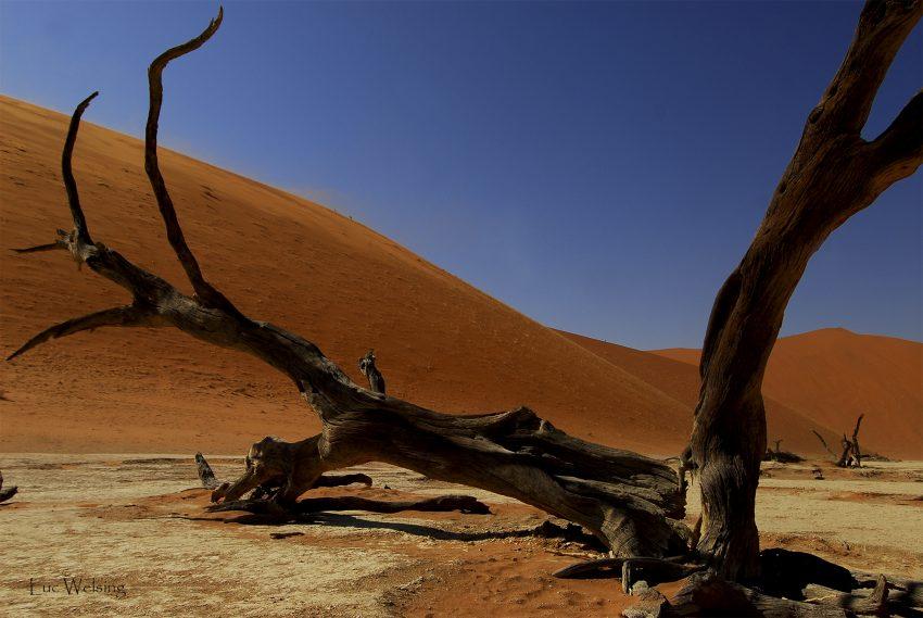 La forêt pétrifiée, Namibie, 2010